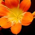 Six Petals