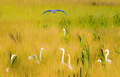 Everglades Birds