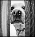 A Nosey Friend