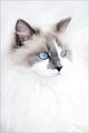 Blue-Eyed Girl