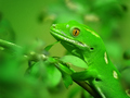 Mr Gecko