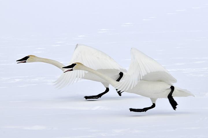 Dancin' In The Snow