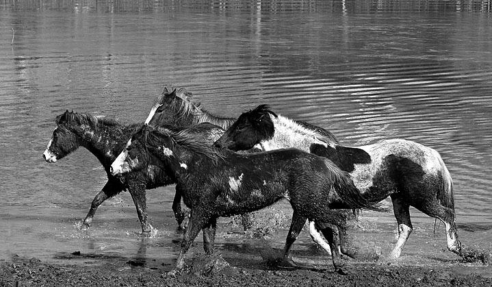 Mud & Flood