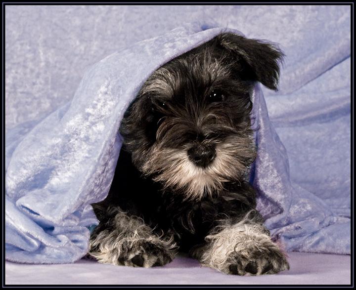 Peek-a-pup