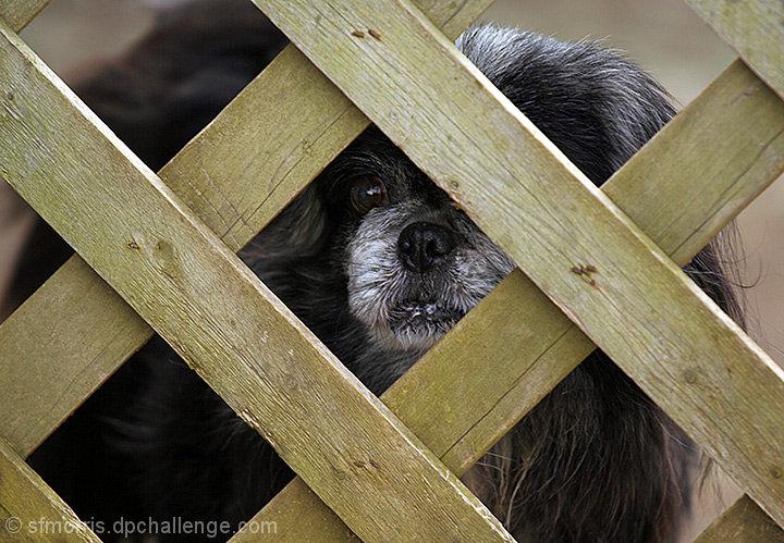 Peking through the fence