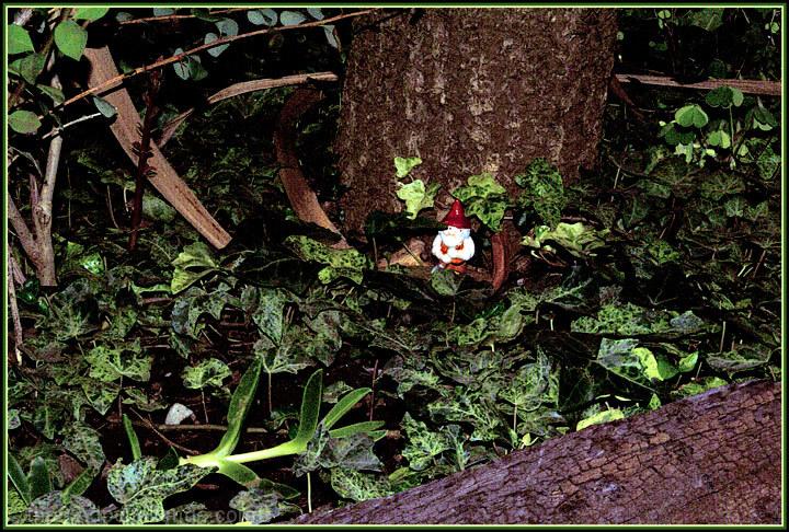 Caught elf !!! ......(I Believe!!...Do you?)