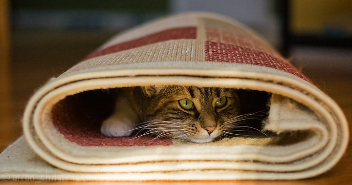 I'll put that rug back once I find the cat!