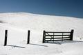 Snowey field