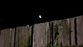The moon over the back fence