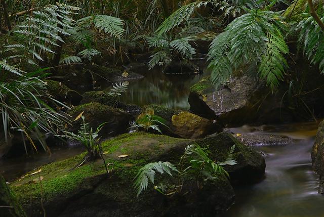 Rainforest cool