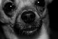 Portrait of a Snout
