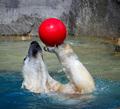 Polar Ball