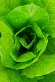 Lettuce Alone