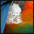 Natures Colourwheel