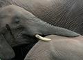 Delightful Elephant Friendship