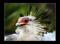 A Bird's Crown
