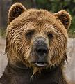 A Bear's Concern