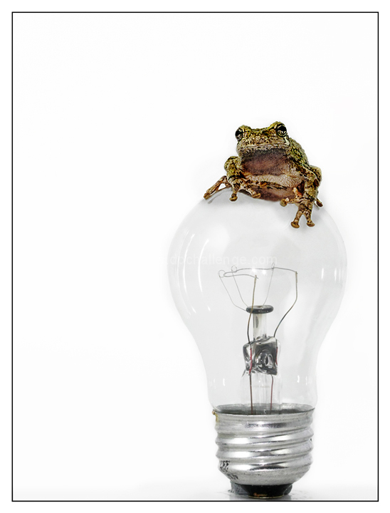 """Frog has a Better Idea"""
