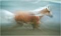 ~ Seahorse ~