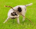 X-cellent Puppy