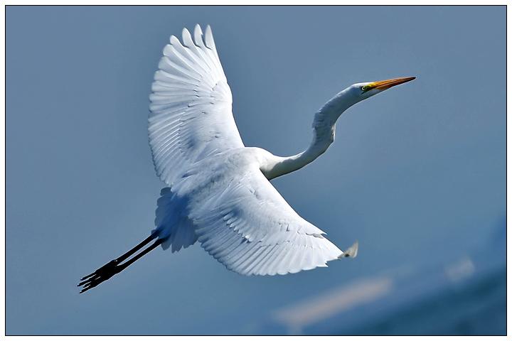 X...the Flight of the Heron