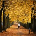 Autumn Parade