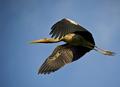 Flight of the Stork
