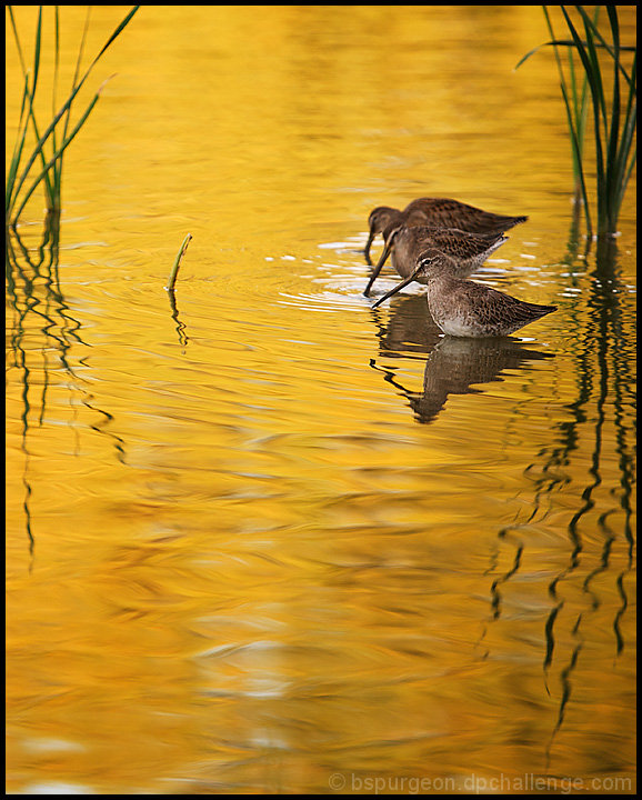Water Fowl at Sunset