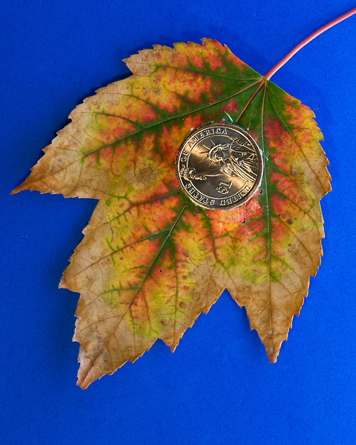 An Autumnal Gift from the Money Tree