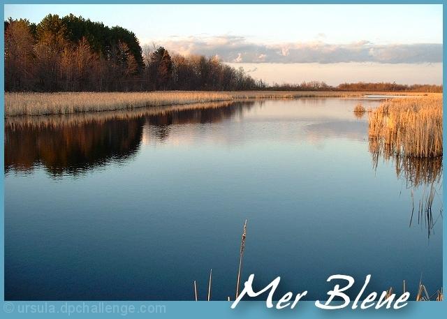 Come Visit the Mer Bleue Bog in Ottawa!