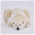 - Frosty Bear -