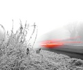 Frosty Morning Traffic