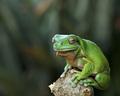 Posing Amphibian