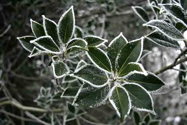 New Year Hoar Frost