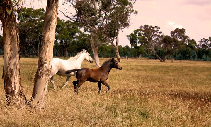 Missy's Horses