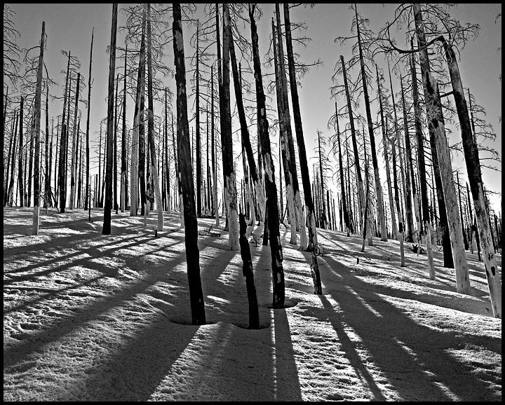 Shadows, Lines, Light