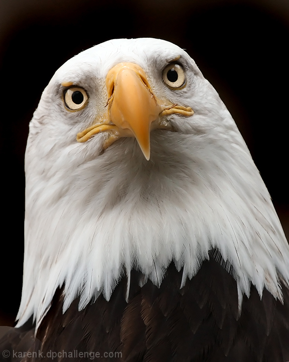 Eagles Glare