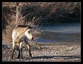 January's Pony