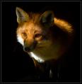 Fuchs, hast du die Gans gestohlen?