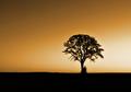 Sepia dawn