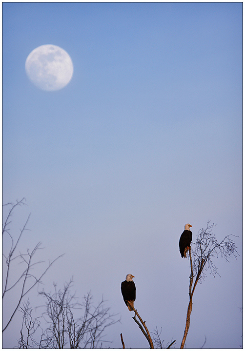Moon Eagles