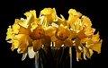 March...Harbinger of Spring.