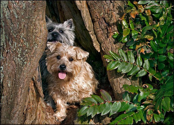 June - Terriers