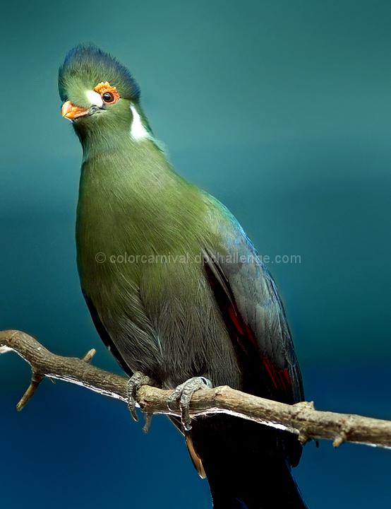 Zoo Birds - Spring Green (March)