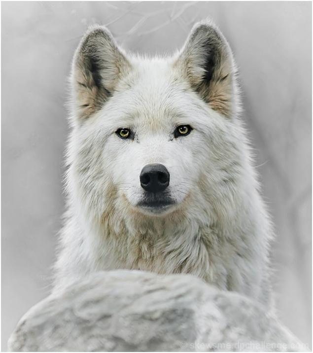 wolfwatch
