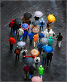 Rainy Day Optimists