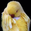 Eye Spy Parrot