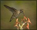 """""""Freebird"""" - Lynyrd Skynard"""