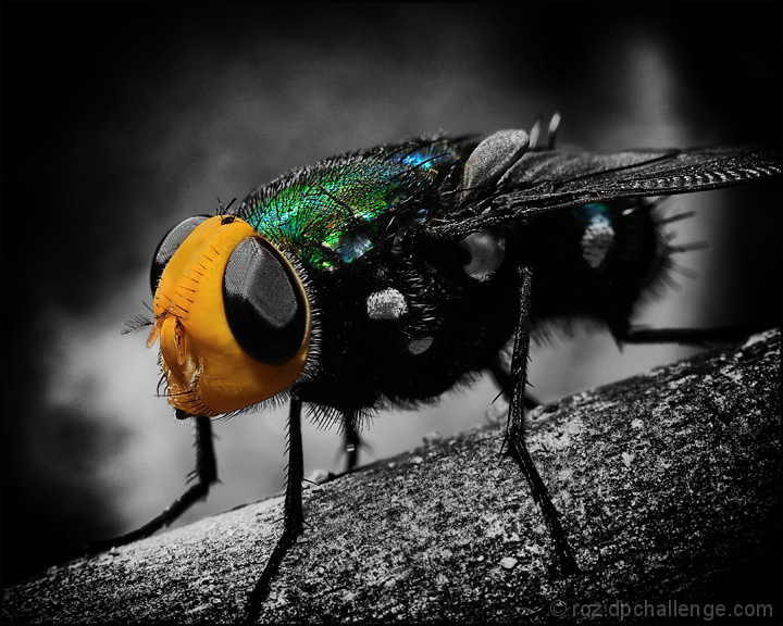 The Fly by U2
