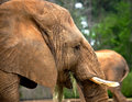 Say Hi to Mr. Elephant